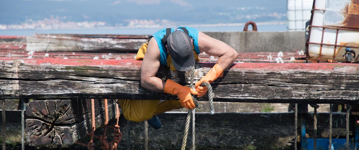 El cambio climatico en el mar azota a las bateas de Arousa