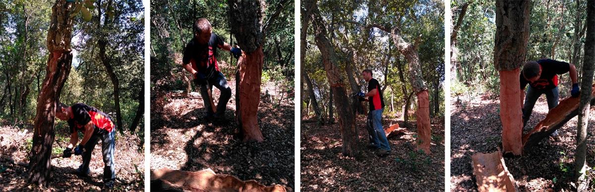 Oleguer Plana durante los trabajos de la pela en su finca, afectada por los cambios climaticos en el bosque