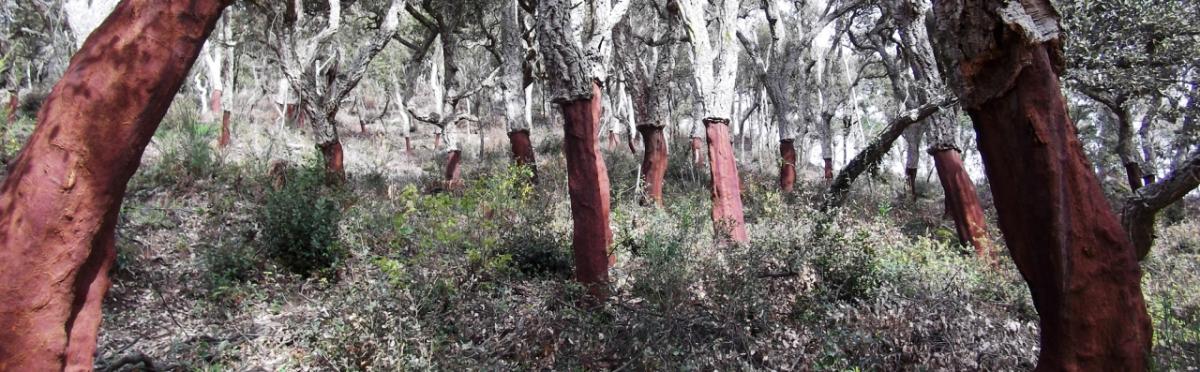 El cambio climatico en el bosque